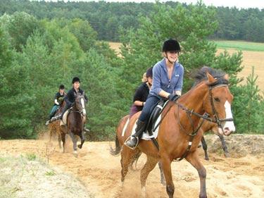 niedersachsen-pferd-sandberge