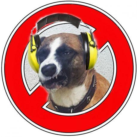 silvester-ohne-boeller-feuerwerk-mit-hund