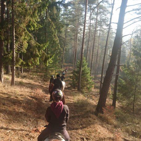 reiterhof-lueneburger-heide-trainigswoche-reitjagd-fuchsjagd-reitwoche-wanderreiten (8)