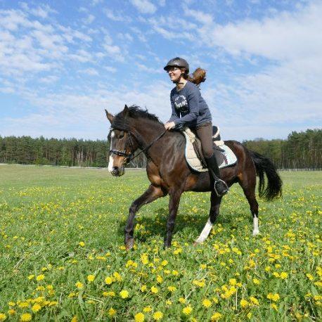 pferde-lueneburger-heide-016