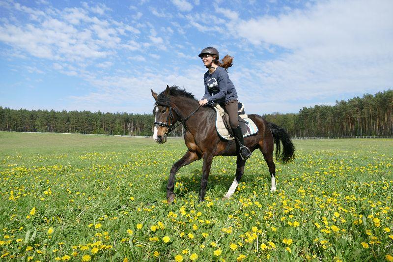 Wir heißen den Sommer willkommen! Pferde und blühende Wiesen